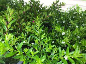 61093220 2097849437179205 5095157932748701696 o 300x225 - Wymień odpady na roślinki